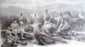Pescari de lipitori